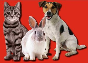 dog cat & rabbit with red background